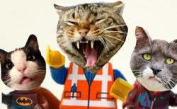 slipnote_cats (Bild: Paul Curran/Slipnote)