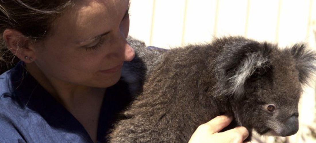 blog-slide-koala-image-by-hollightly-de