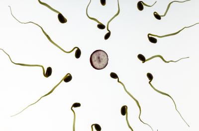 Spermien (Image by TBIT (CC0 Public Domain)via Pixabay)
