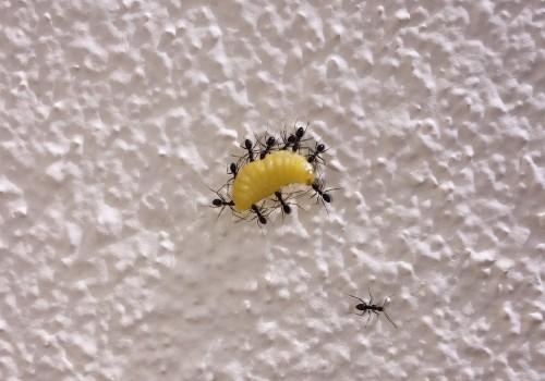 Ants (Image by culturalibre [CC0 Public Domain], via Pixabay
