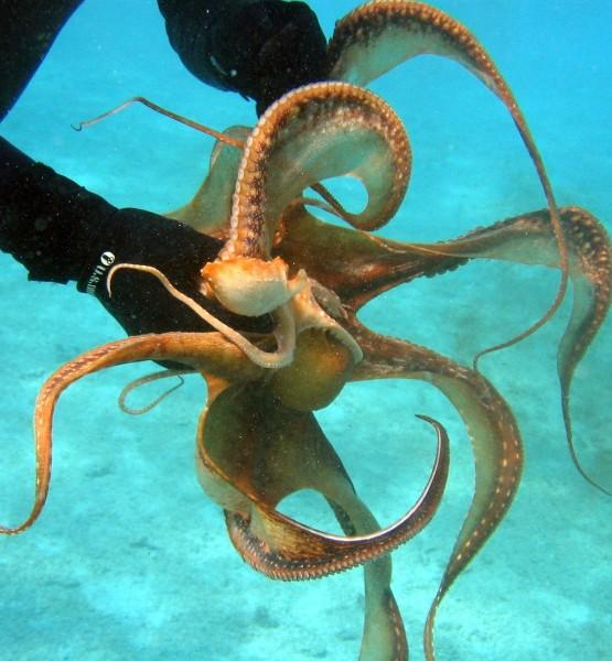 diver-79948 (Image by tpsdave [C00] via Pixabay