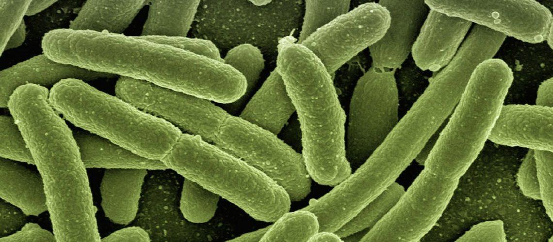 Koli Bakterien (image by geralt [CC0] via Pixabay)
