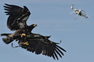 Drone interception (Imagy via Guard From Above- Maarten van der Voorde)