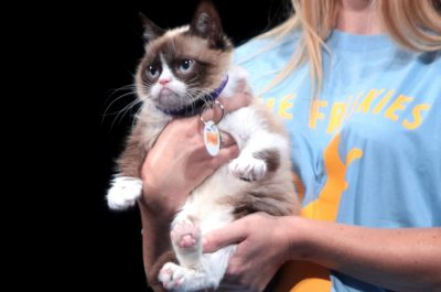 Grumpy Cat (adapted) (Image by Gage Skidmore [CC BY-SA 2.0] via Flickr)