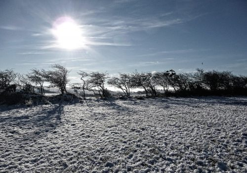 Irland, Ireland, Natur, Sonne, Schnee, Frost, Winter, Sonnenstrahlen, Weihnachten