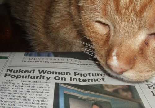 Cat enjoys porn (adapted) (Image by magerleagues [CC BY SA 2.0], via flickr)