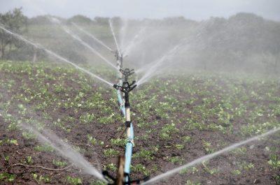 Bewässerung, Pflanzen, Sprossen, Sprössling, Wasser, Beregnung, Feld, Acker