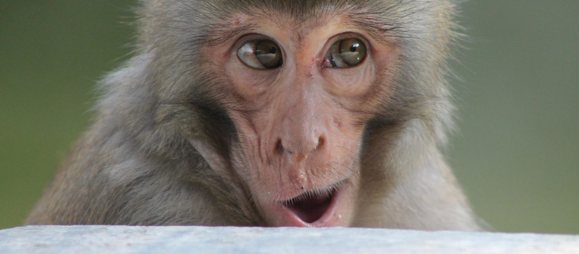 Monkey (adapted) (Image by samuelrodgers752 [CC BY 20] via flickr)