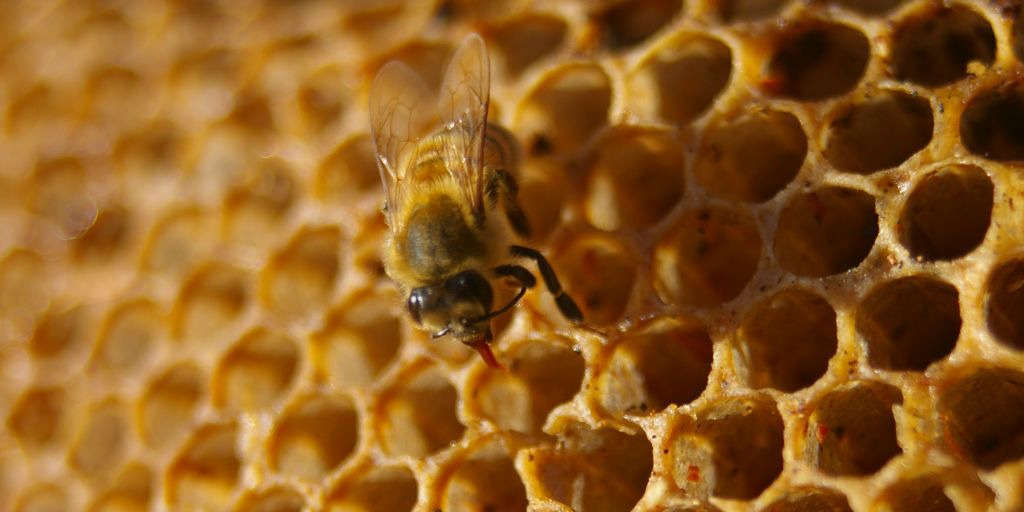 sweet, sweet honey (adapted) (Image by Peter Shanks [CC BY 2.0] via flickr)