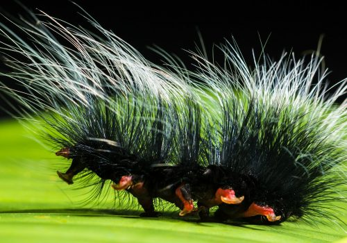 caterpillar (adapted) (Image by Josch13 [CC0 Public Domain] via Pixabay)