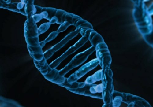 DNA (adapted) (Image by PublicDomainPictures [CC0 Public Domain] via Pixabay)