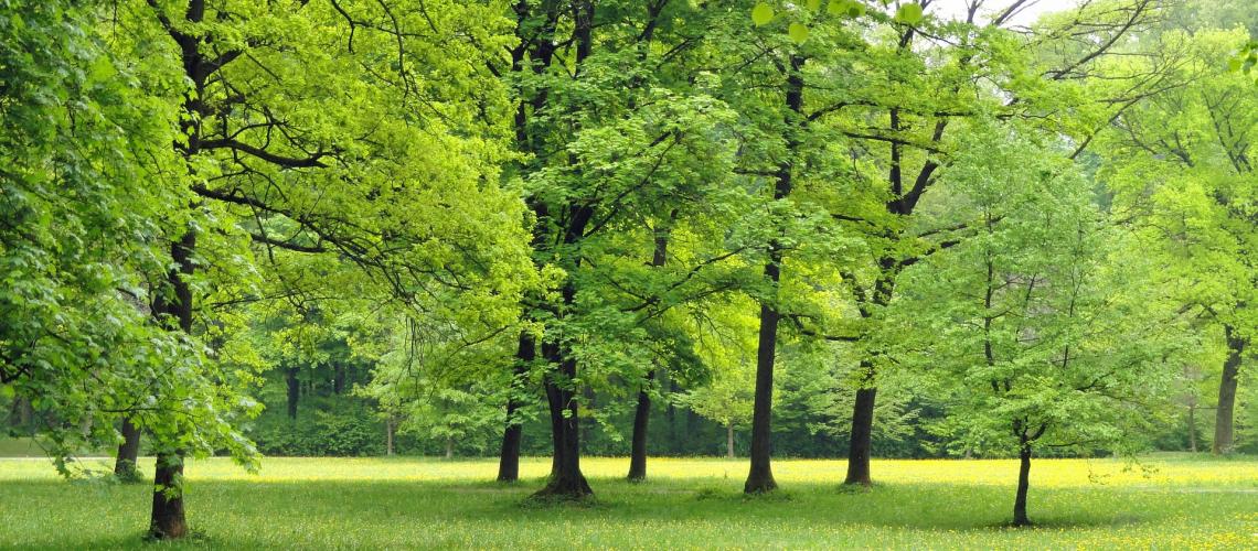 Wald(adapted)(Image by 12019 [CC0 Domain] via Pixabay)