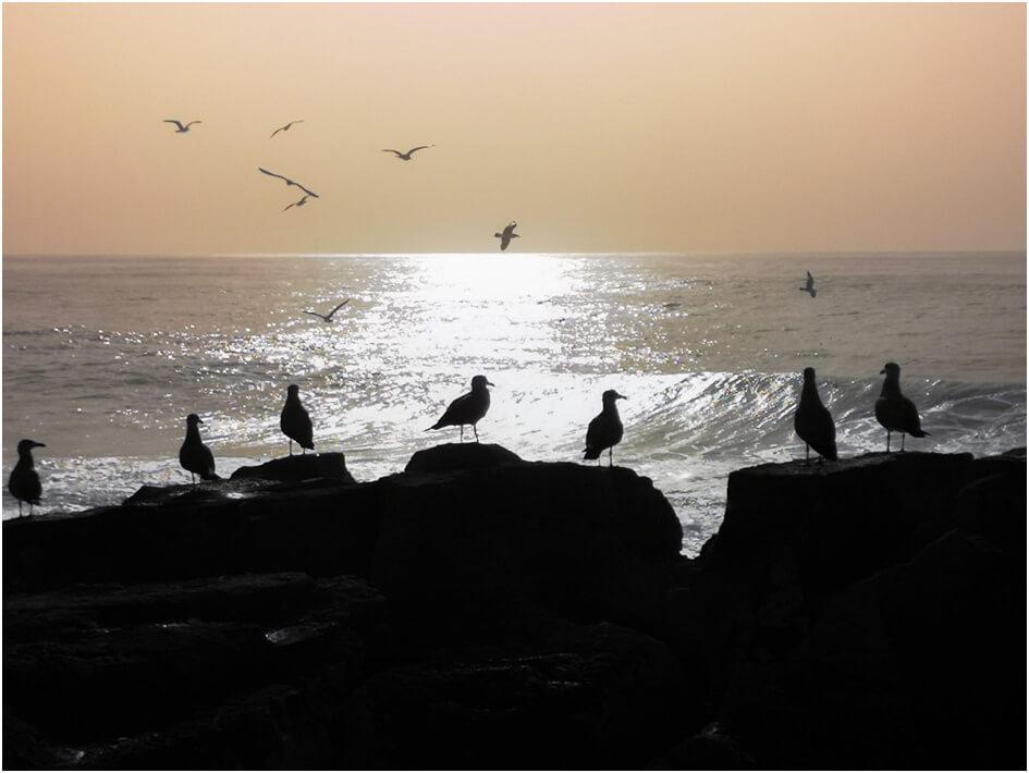 Vögel am Strand von Ericeira