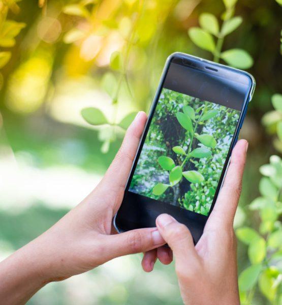 zwei Hände halten ein Smartphone, die Kamera ist angeschaltet und zeigt auf eine Pflanze