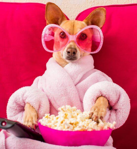 Hund in Morgenmantel und fancy Brille schaut Fernsehen mit Popcorn.